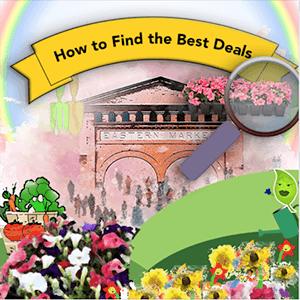 15 Ways Get Cheap Eastern Market Flower Prices