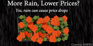Eastern Market Flower Days Deals